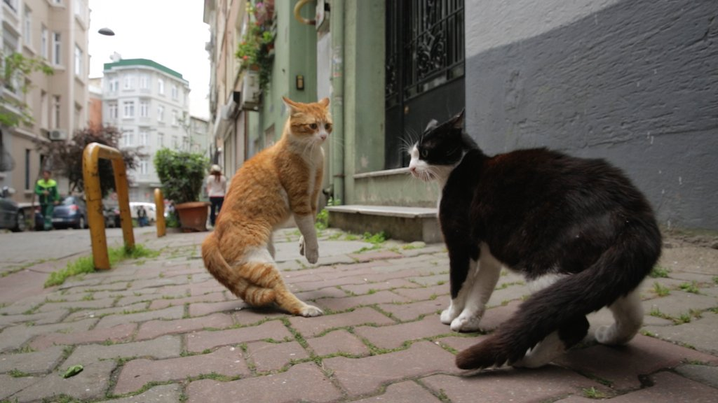 'Kedi' finds compassion and humanity through cats