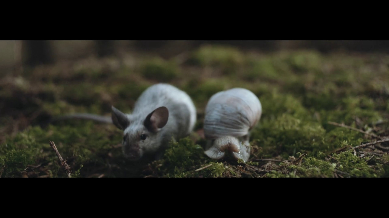 """A wood mouse meets its fate in alt-J's """"In Cold Blood"""" video"""