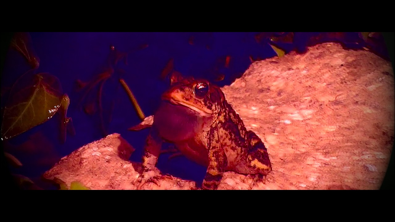 """Microwave share beautifully haunting video for """"Roaches"""""""