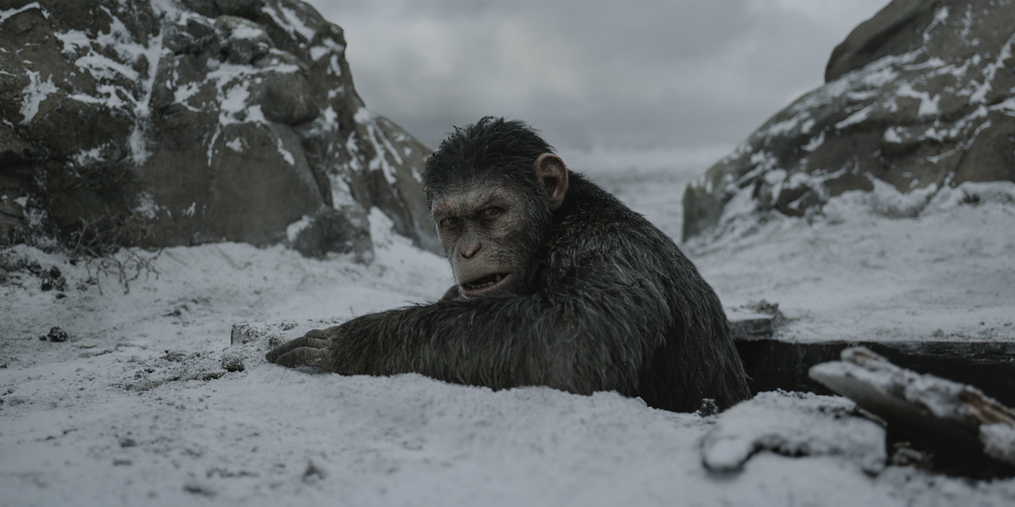 'War for the Planet of the Apes' is one of the best films you will see this year